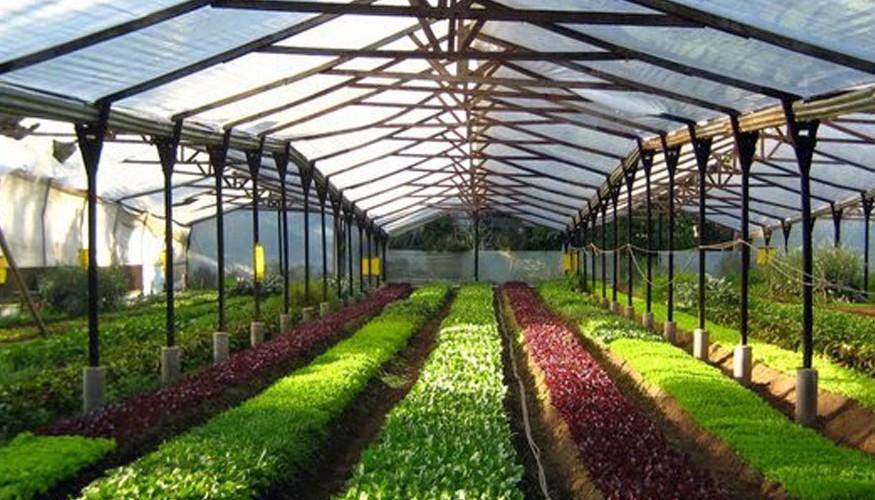 Caoba-Farms-1