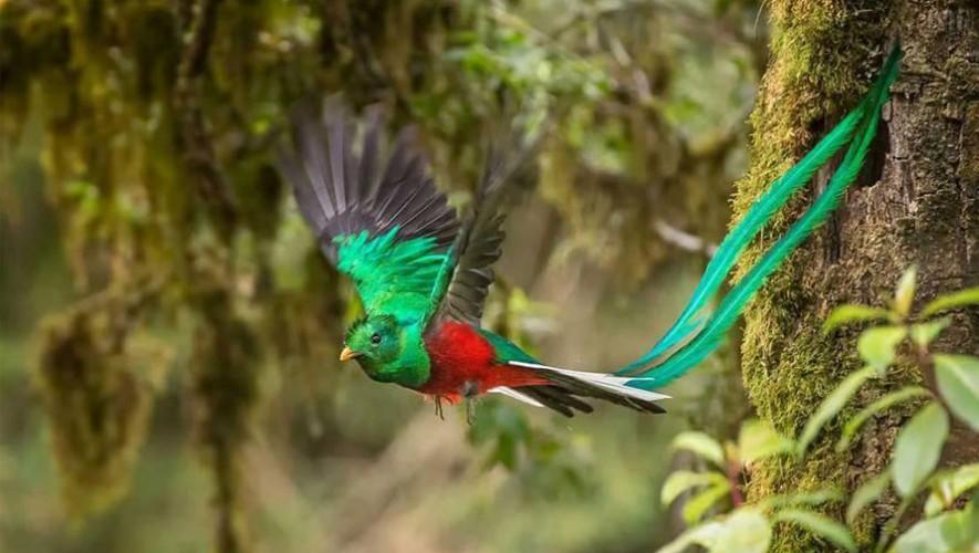 Guatemala forma parte de los países megadiversos del mundo. (Foto: Facebook Perhaps you need a little Guatemala/ Edwin Yanes)