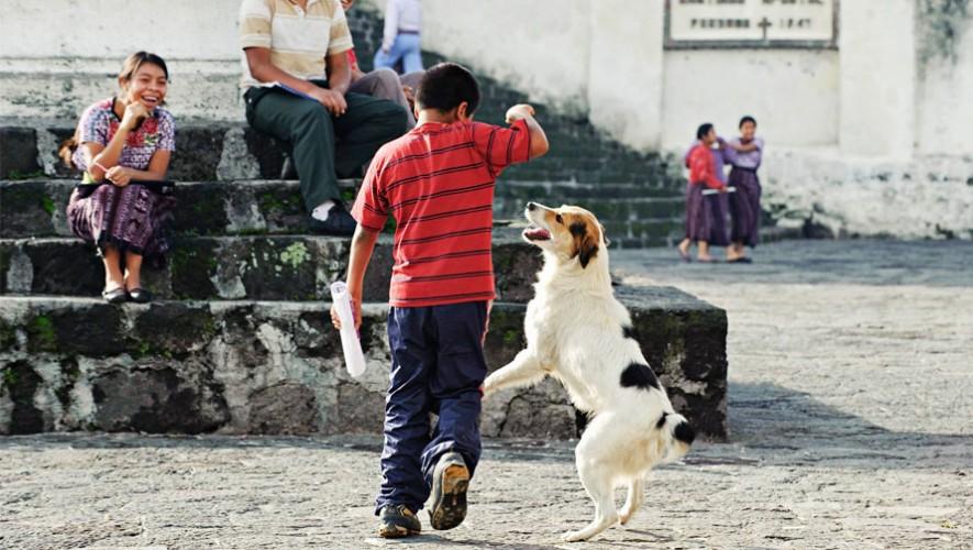 Una iniciativa en Antigua Guatemala busca fomentar el apoyo a los animales callejeros. (Foto: Facebook Perhaps you need a little Guatemala/ Gracela o León)