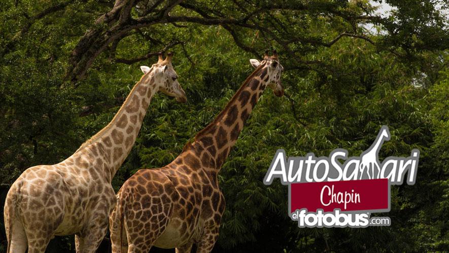 Tour por el AutoSafari Chapín, organizado por El Fotobus   Diciembre 2015