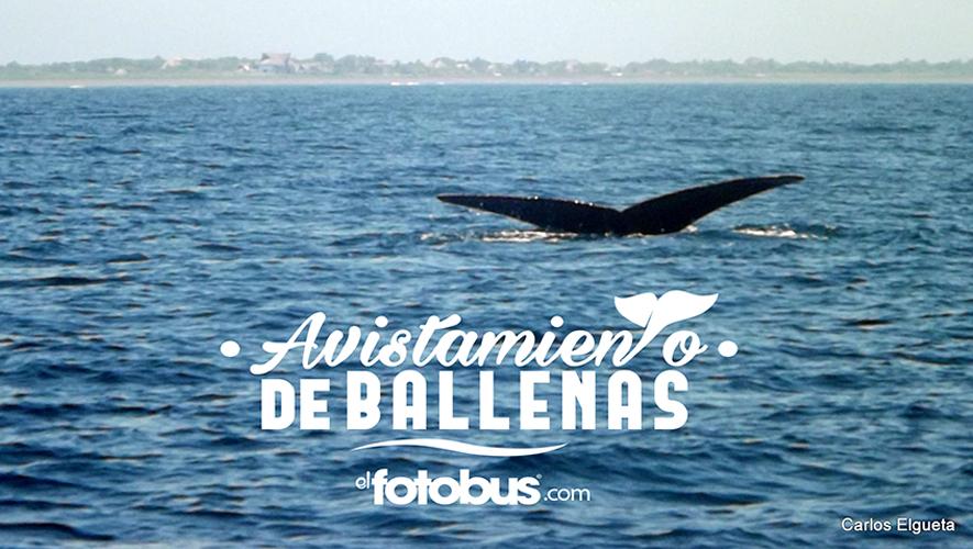 Avistamiento de ballenas en Marina Pez Vela | Febrero 2016