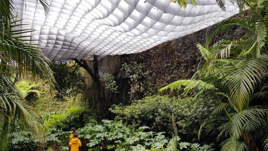 El proyecto Landscape Canopy fue creado para proteger, dar sombra y privacidad, dejar pasar la luz y la lluvia hacia un área verde. (Foto: Paredes + Alemán)