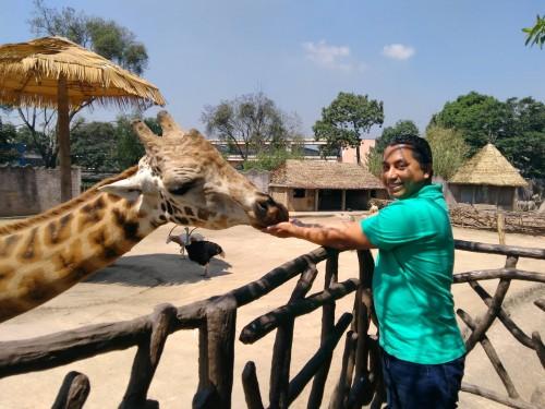 Puedes alimentar a las jirafas del Zoológico La Aurora. (Foto: Gerberth Pérez)