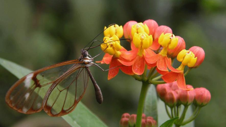 (Foto: Parque Ecológico Atitlán Mariposario)