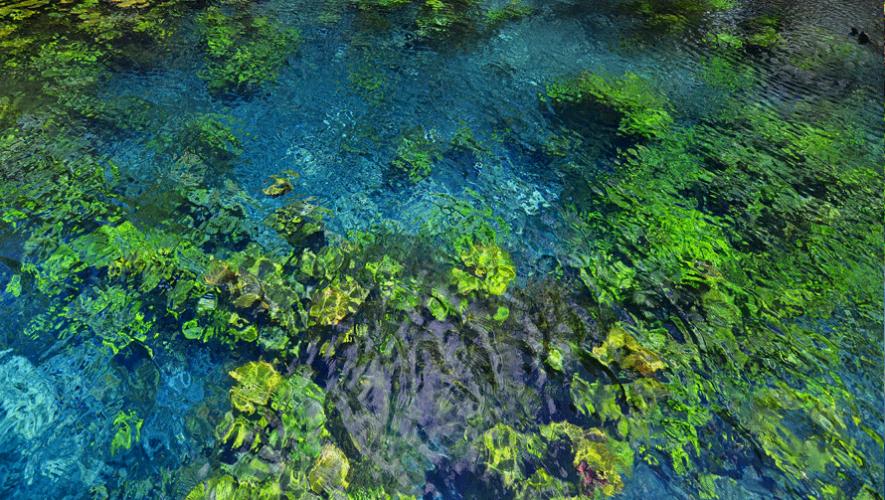 Nacimiento de Arroyo Pucté, sus aguas cristalinas permiten ver el jardín subacuático. (Foto: Rony Rodríguez)