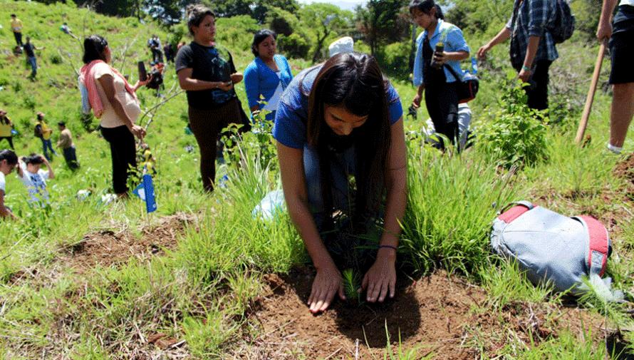 Plantemos 1000 árboles