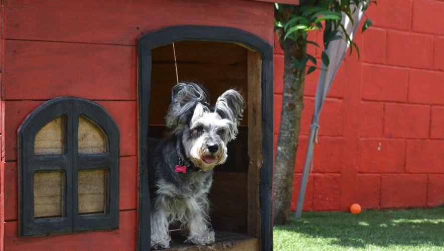 No dejes sola a tu mascota cuando sales de vacaciones,  utiliza los hoteles para perros en Guatemala. (Foto: Wuff Doggy Daycare)