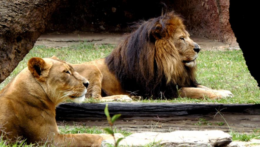 El Zoológico La Aurora es uno de los 15 mejores de América según Telemundo. (Foto: Edwin Padilla)