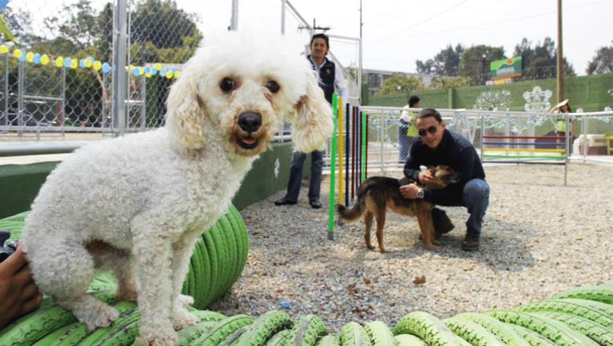 Adopta una mascota en la Feria Municipal de Adopciones 2016. (Foto: Albergue Municipal de Mascotas)