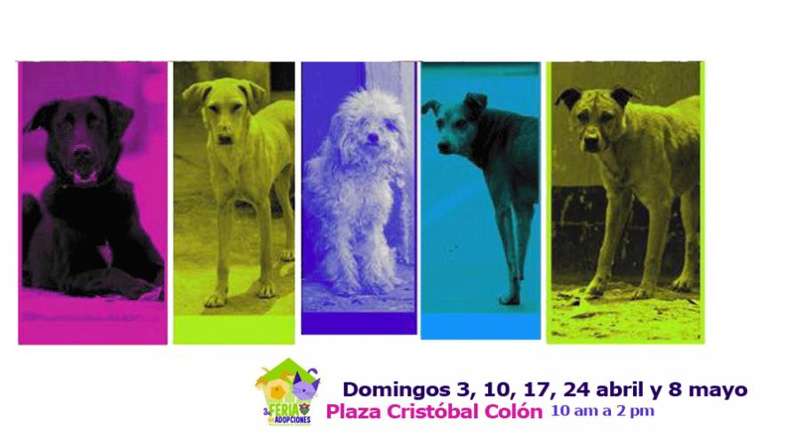 La tercera Feria de Adopción de Mascotas se llevará a cabo en Pasos y Pedales de zona 13. (Foto: Pasos y Pedales)