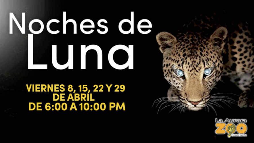 Noches de Luna en el Zoológico La Aurora   Abril 2016