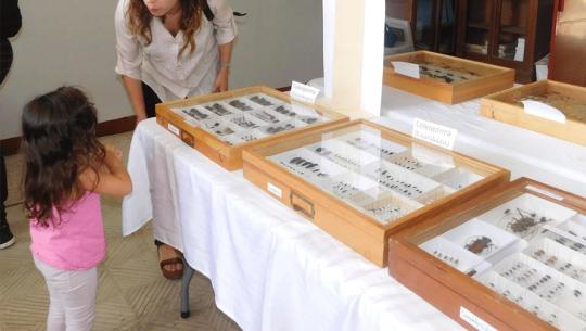 (Foto: Museo De Historia Natural Usac)