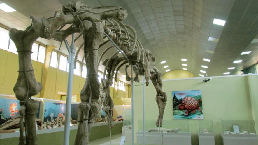 Museo de Paleontología de Estanzuela  contiene una gran colección de mamíferos gigantes de hace más de mil años. (Foto: Dr Barrientos)