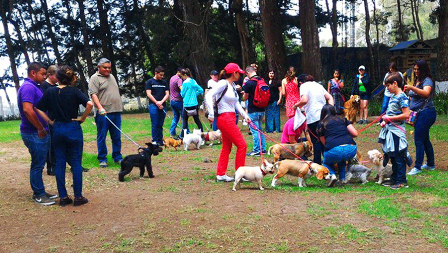 Disfruta de un fin de semana lleno de comida, actividades para toda la familia y eventos pet friendly (Foto: Guau Box)