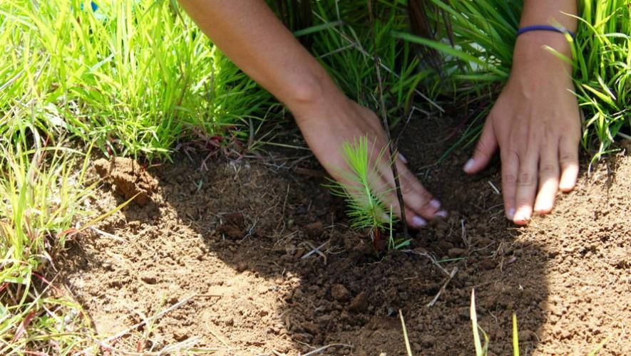 Plantemos 1000 árboles en Ciudad de Guatemala| Mayo 2016