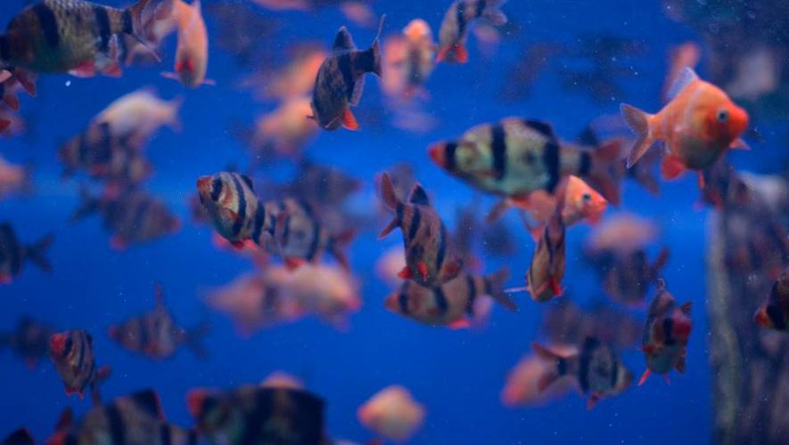 Celebra el Día Mundial de los Océanos en Guatemala conociendo más acerca de la vida marina. (Foto: Elmonocular)