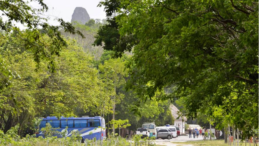 Varias personas viajarán desde la Ciudad de Guatemala hacia Petén para ayudar en la reforestación del área. (Foto: Rony Rodríguez)