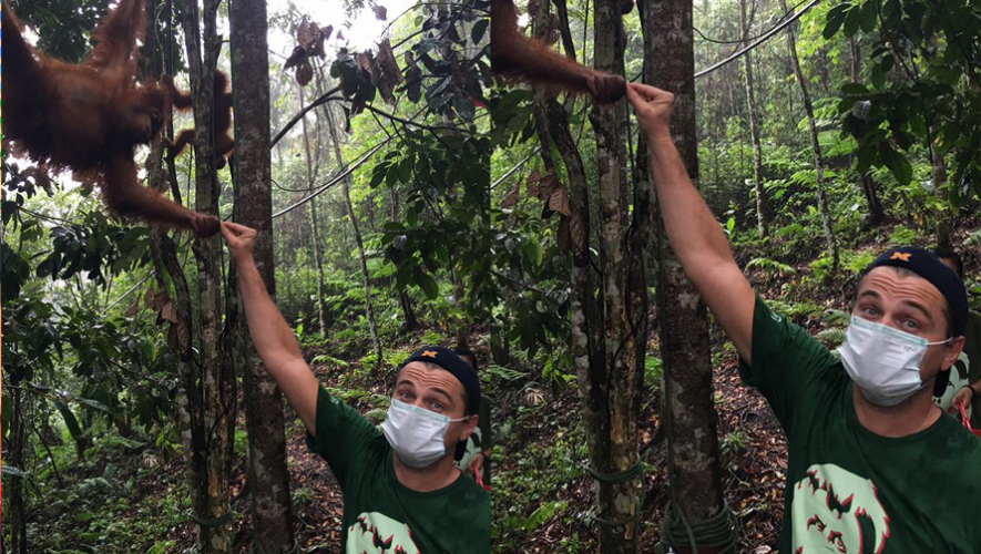 Leonardo DiCaprio en una programa que cuida la conservación de los orangutanes en Indonesia. (Foto: Leonardo DiCaprio)