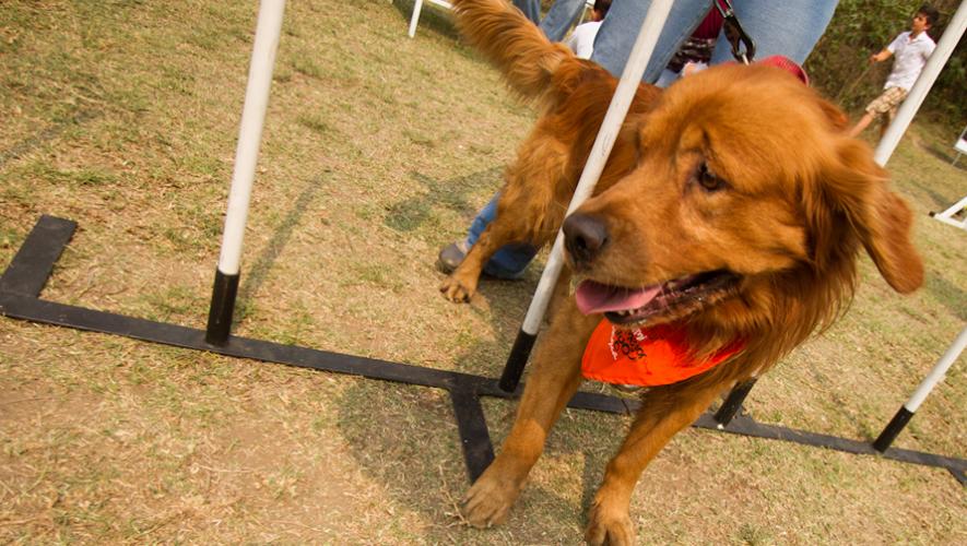 Únete a la campaña de Amigos de los Animales y Paiz para donar alimento a los perros en albergues y calles. (Foto: Nelo Mijangos)