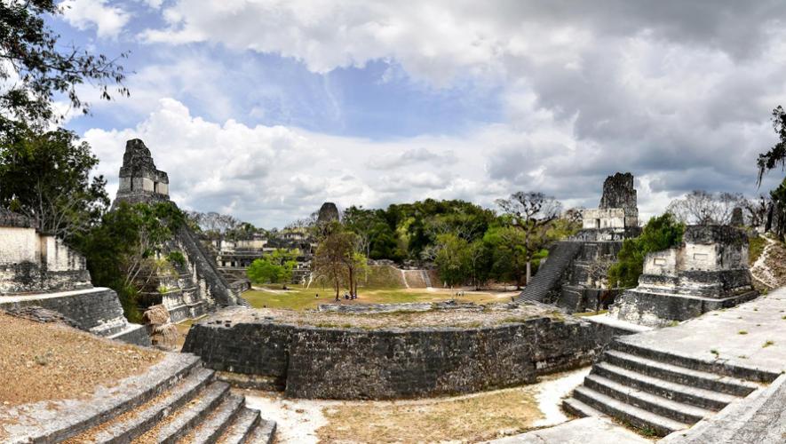 Forma parte de esta gran iniciativa para reforestar las áreas quemadas de Tikal. (Foto: Rony Rodríguez)