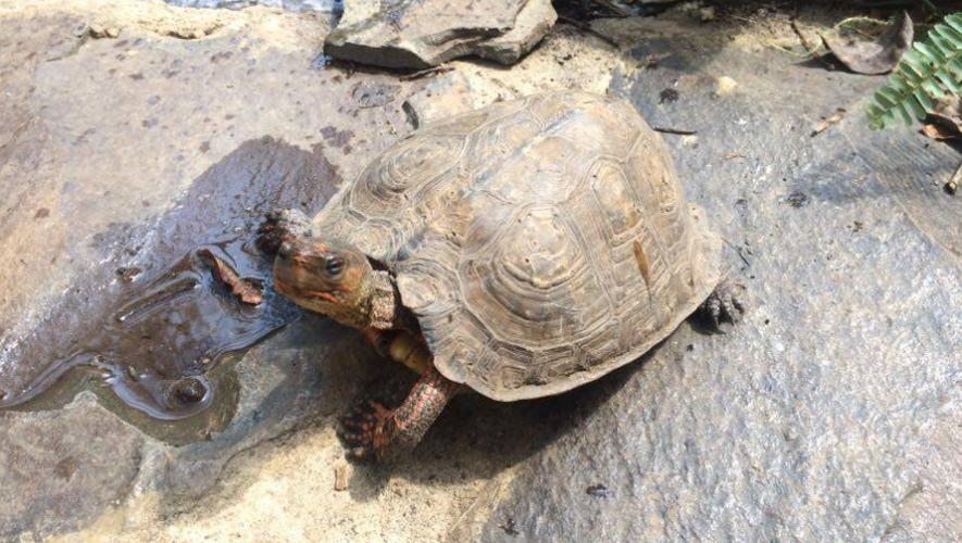 Conoce y aprende más sobre las tortugas en el nuevo tortugario de Museo Miraflores. (Foto: Cortesía Museo Miraflores)