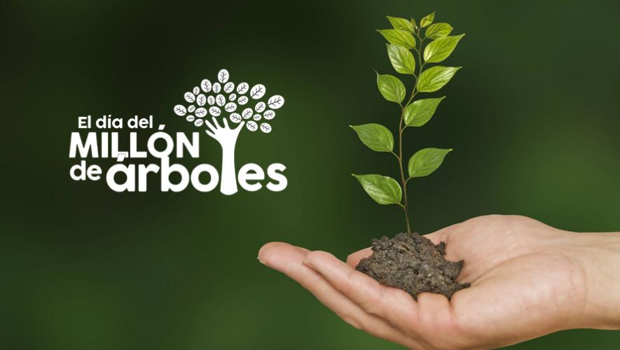 Únete a los voluntarios que sembrarán un millón de árboles en Guatemala. (Foto: El día del millón de árboles)