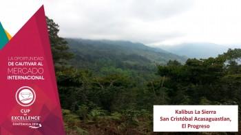 (Foto: Asociación Nacional de Café Guatemala)