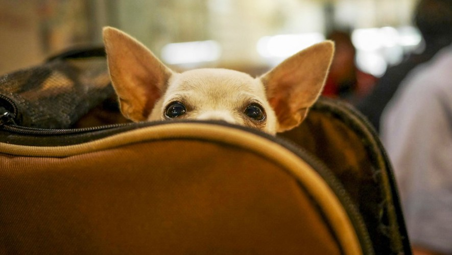 Conoce cuáles son los requisitos para viajar con tu mascota en Guatemala (Foto: Conde Nast Traveler)