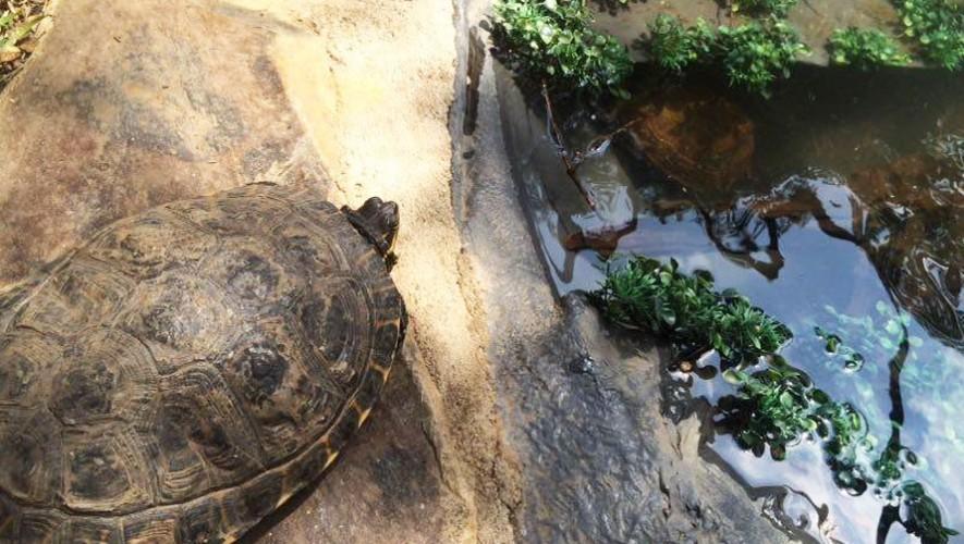 Alimentar a las tortugas en Museo Miraflores | Agosto 2016