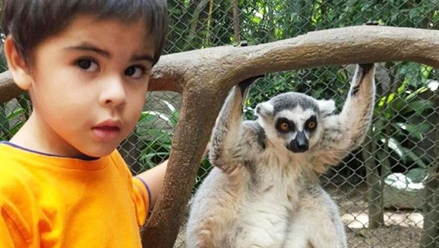 Inscribe a tus hijos en un curso para convivir con los animales en el zoológico. (Foto: Zoológico  La Aurora)