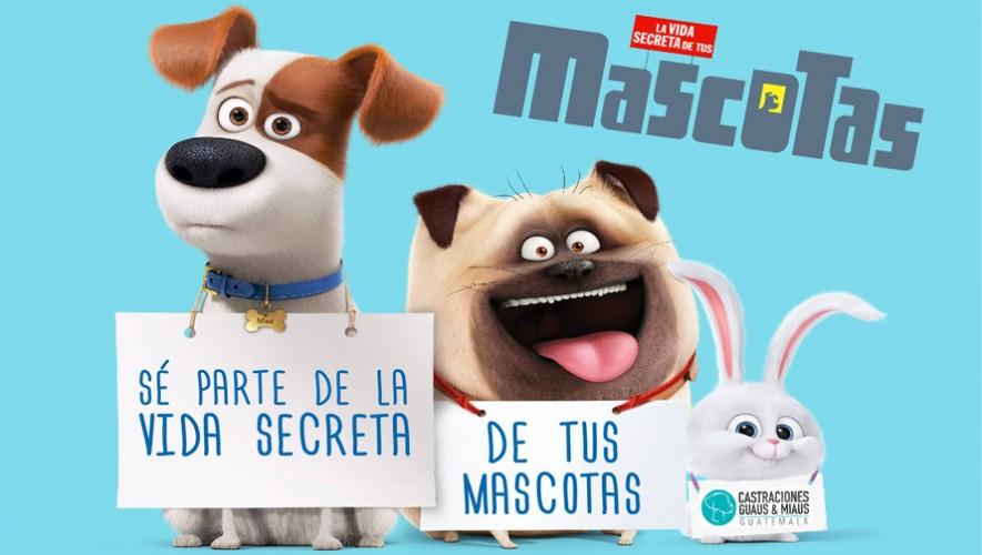 Función benéfica de la Vida Secreta de tus Mascotas en Miraflores | Agosto 2016