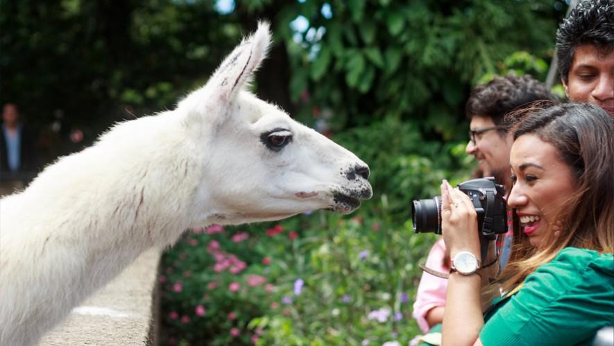 Toma las mejores fotografías en los tours VIP del zoológico. (Foto: Zoológico La Aurora)