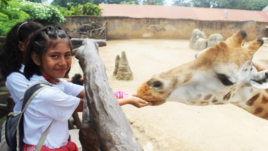 (Foto: Zoológico  La Aurora)