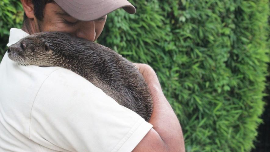 Sé un voluntario del zoológico en Guatemala y vive una experiencia única. (Foto: Parque Zoológico Nacional La Aurora)