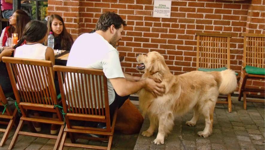 Conoce los lugares en Guatemala que te permiten llevar a tus mascotas contigo. (Foto: Karma Gastro-Bar)
