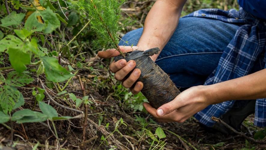 Mega Siembra de árboles en San José Pinula | Septiembre 2016