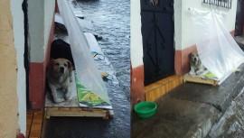 Perros se resguardan de la lluvia gracias a un guatemalteco. (Foto: Noemii Morålles)