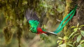 El fantástico fotografo Phoo Chan capturó el momento perfecto del Quetzal. (Foto: Phoo Chan)