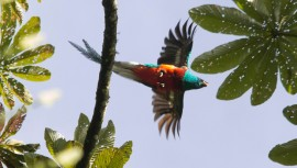 El diario español El País publicó un artículo contando la historia del Quetzal. (Foto: Ranchitos del Quetzal)