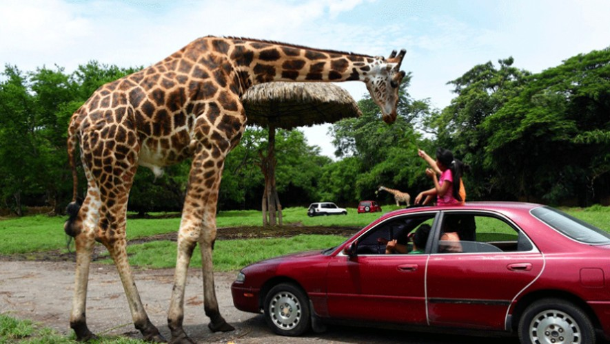 Viaje a Auto Safari Chapín | Octubre 2016