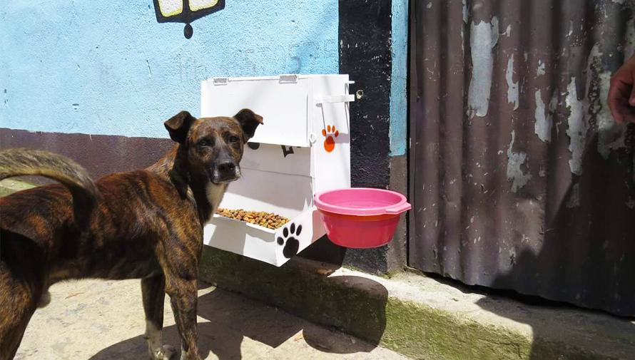 instalan comedores solidarios para perros sin hogar en