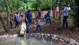 Disfruta de un nuevo parque ecológico especialmente diseñado para mascotas. (Foto: Green Rush)