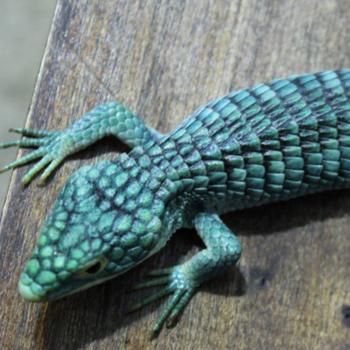 (Foto: Reptiles Canada)