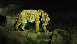 Regresan a la Ciudad de Guatemala las Noches de Luna del Zoológico La Aurora —Fotografía con fines ilustrativos— (Foto: catterflyworx)