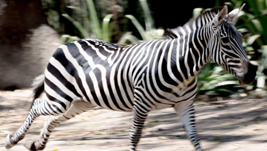 Auto Safari Chapín
