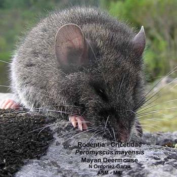 (Foto: Mammalogy)