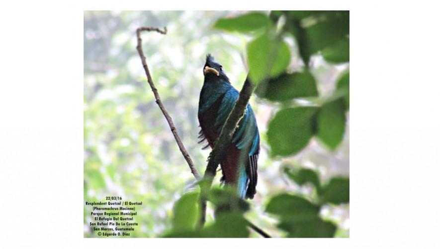 Refugio del Quetzal