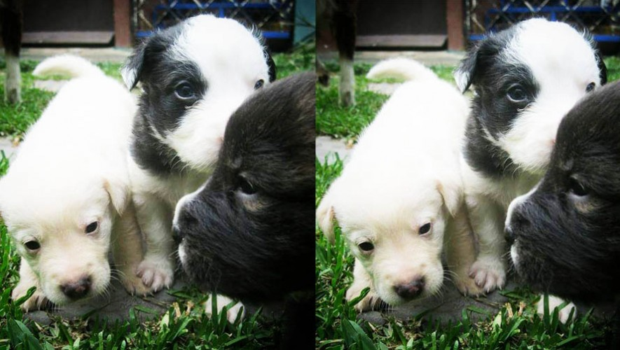 (Foto:AMA Asociación de Amigos de los Animales)
