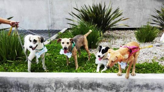 (Foto: Abrazo Animal Guatemala)