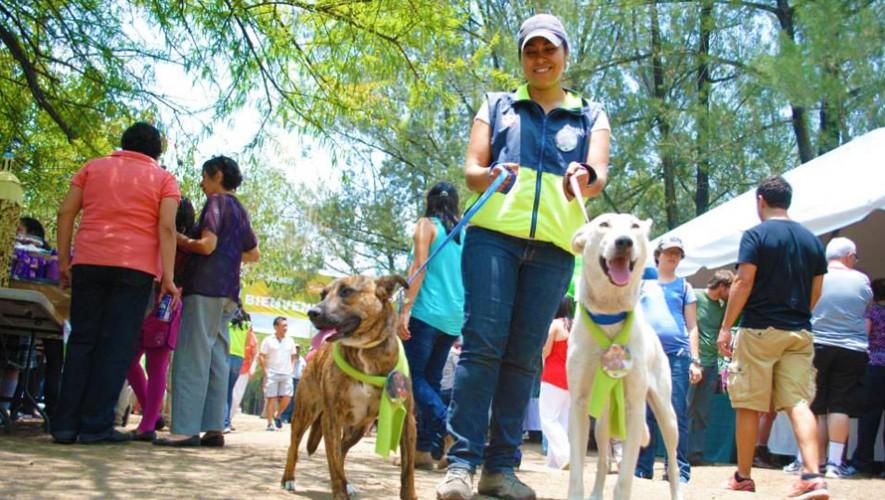 Celebra el quinto Domingo Verde en la Ciudad de Guatemala, un evento al aire libre y para toda la familia. (Foto: Alcaldía Auxiliar Zona 15)